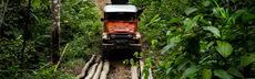 Truck urwald