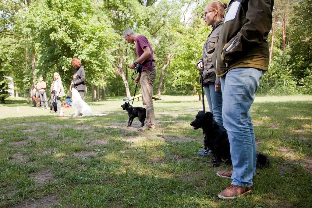 Hundeerziehung Brauchen Hunde Aggression Wdr De