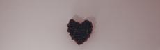 mg 0756 rosa