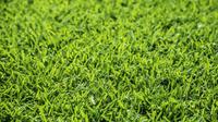 Rasen moenchengladbach3