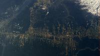 Amazonasabholzung